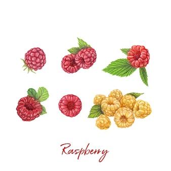 新鮮な果実手描きのベクトル図