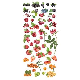 Свежие ягоды рисованной векторные иллюстрации