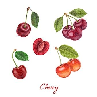 新鮮な果実手描き