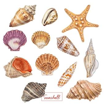 手描き貝殻セット