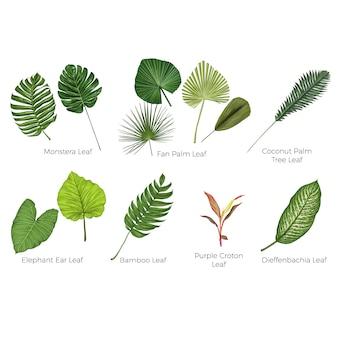 熱帯の葉植物のベクトル図