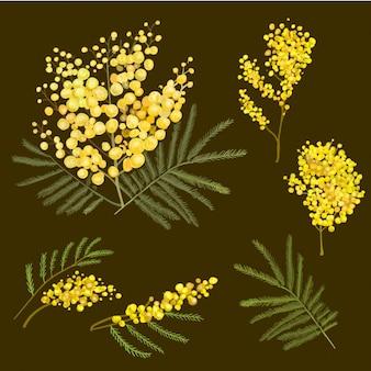ミモザ植物画