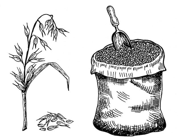 Зерно в мешке и колосья овса.