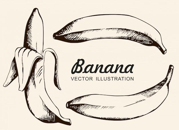 バナナのベクトルを設定します。シングルバナナ、皮をむいたバナナ。インク描画、ベクトル、分離します。
