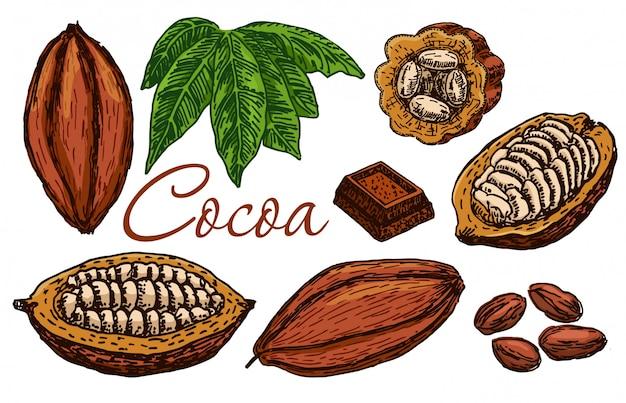 カカオ豆、カカオの葉、カカオの実が入ったカカオの枝、チョコレート。