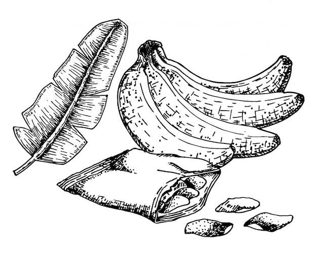 手描きのスケッチスタイルバナナチップセット。果物、バナナチップ、スライス。有機食品、白い背景の上の落書きイラストコレクション。