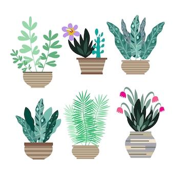 Домашние комнатные растения в горшках