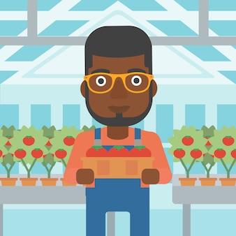 Фермер собирает помидоры