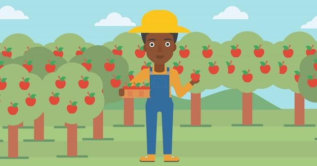 農家の収集りんご