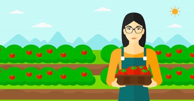 Фермер собирает помидоры.