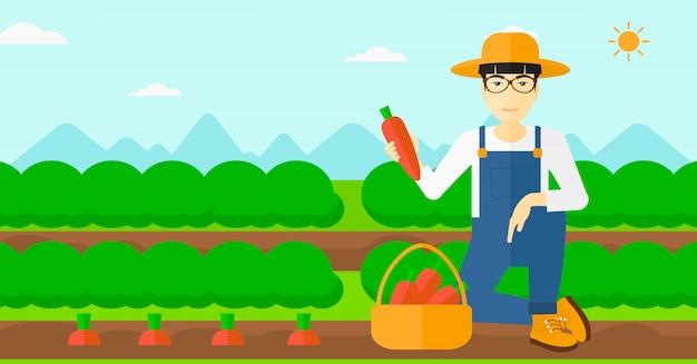 Фермер собирает морковь.