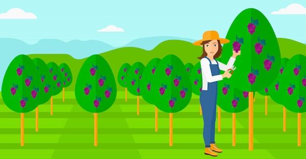 ブドウを集める農夫。