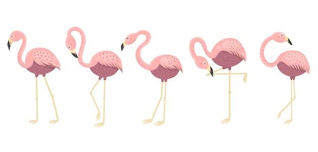 Смешные фламинго в разных позах коллекции. изолированные элементы