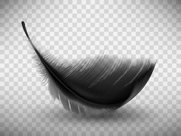 Черное пушистое перо с реалистичной тенью