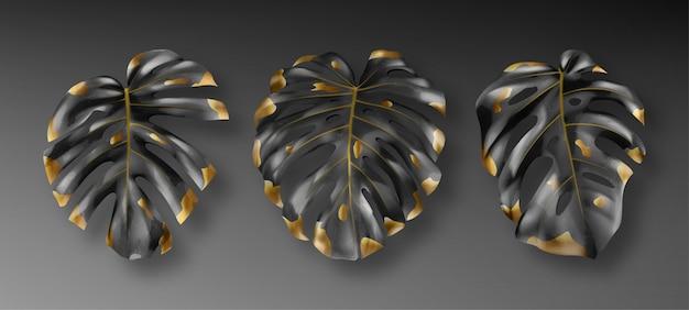 熱帯の黒と金のモンステラの葉
