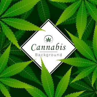 Зеленый конопли листьев наркотиков марихуана трава фон.