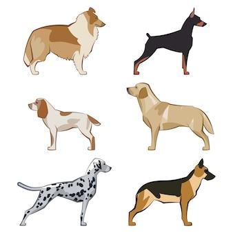 フラットな座っているまたはかわいい漫画犬や犬の散歩のセットです。人気のある品種。フラットスタイルのデザインが分離されました。ベクトルイラスト