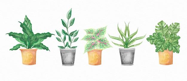 鍋に植物の水彩セット