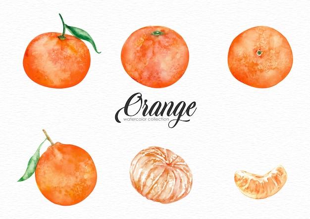 様々なスタイルのオレンジ色の果物の水彩画のセット