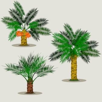 編集可能な分離日ヤシの木のベクトル図