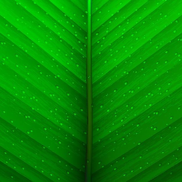 Текстура листьев и капель
