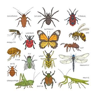 昆虫のカブトムシバグまたはアリと飛んでいる蜂または蝶とトンボまたはゴキブリや白い背景の上のバッタとクモの自然イラストセットのてんとう虫