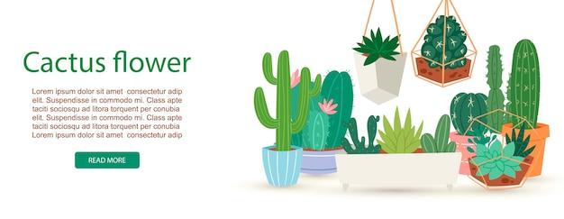 Кактус, суккуленты и растения с цветами баннер
