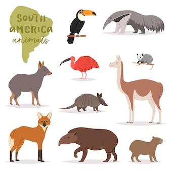白い背景に分離された熱帯トカゲコリブリの南アメリカの野生動物イラストセットで南アメリカの野生動物哺乳類文字カピバラバクオオハシの動物