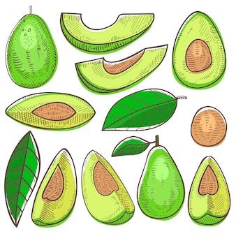 アボカドの緑の有機食品と白い背景に分離された熱帯のスライスされたエキゾチックな成分アボカドダイエットの健康的な新鮮な野菜栄養イラストセット