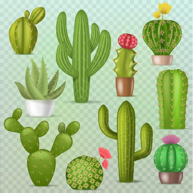 サボテン植物サボテングリーンサボテン多肉植物植物学イラスト漫画のエキゾチックな花が透明な背景に分離された花の現実的なセット