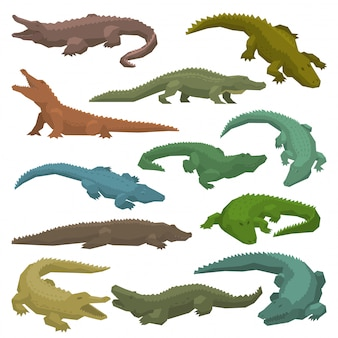 Крокодил векторный мультяшный крокодиловый персонаж иллюстрации зеленого плотоядного аллигатора