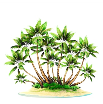 Группа пальм на острове