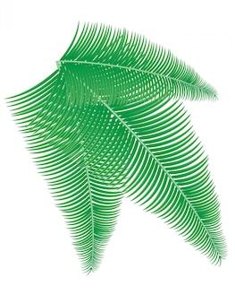 ヤシの枝のベクトル図