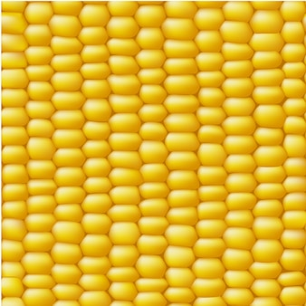 Кукурузный вектор бесшовные реалистичные текстуры