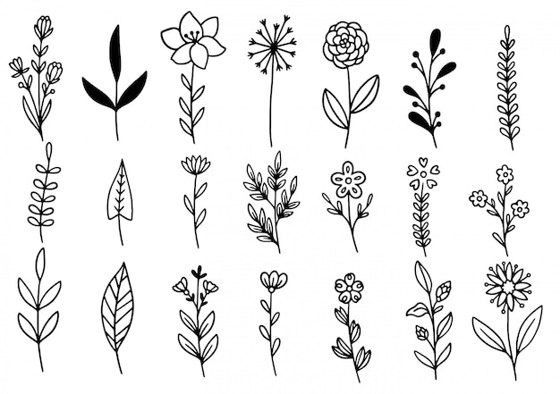 Коллекция лесного папоротника эвкалипта художественная листва натуральных листьев травы в стиле линии. декоративная красота элегантная иллюстрация для дизайна рисованной цветок