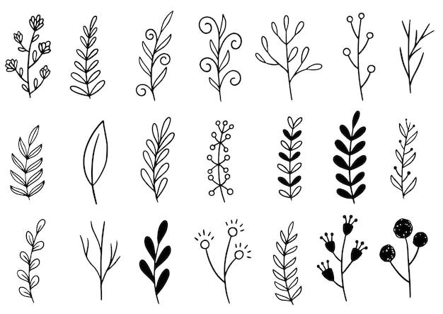 Коллекция лесного папоротника эвкалипта художественная листва натуральных листьев травы в стиле линии.