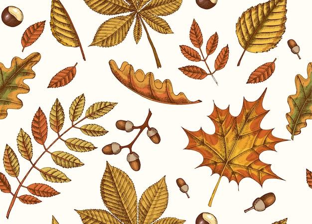手で秋のシームレスパターンは、カエデ、白樺、栗、ドングリ、灰の木、黒のオークの葉を描かれています。スケッチ。壁紙用