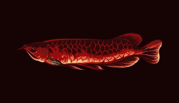 アロワナ魚のイラスト