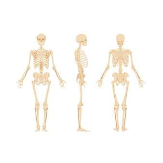 Набор изолированных скелетов
