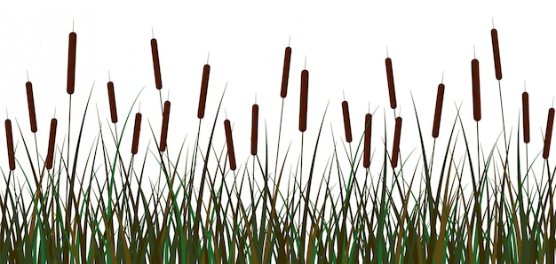 Болото камыша фон. зеленое болото тростниково-коричневое соцветия куста с листвой.