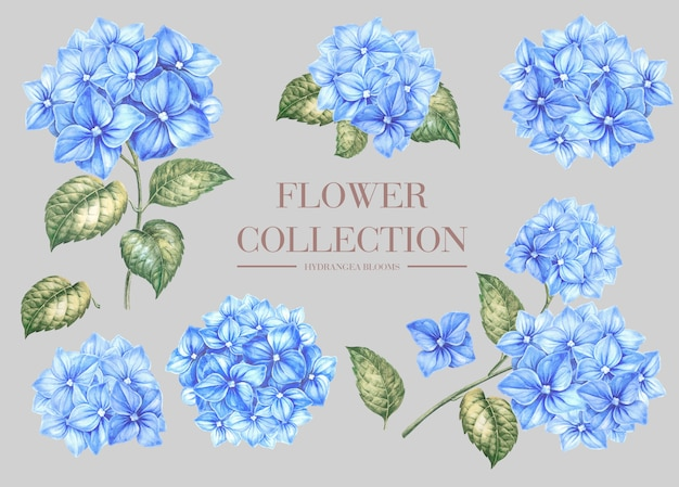 青いアジサイの花を設定します。