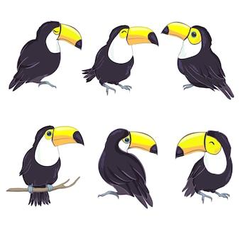 形式の素敵なオオハシのイラスト。保育園や学校での子供の教育と楽しみ、および装飾目的のためのかわいいオオハシ鳥の画像。ジャングル動物コレクション