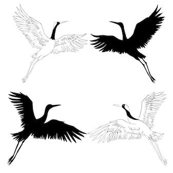 飛行中の野鳥。自然または空の動物。クレーンまたはタンチョウとコウノトリまたはシャドーフと翼を持つチコニア