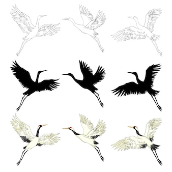 飛行中の野鳥。自然または空の動物。クレーンまたはタンチョウとコウノトリまたはシャドーフと翼を持つチコニア。ビンテージスタイルで描かれた刻まれたスケッチ手。