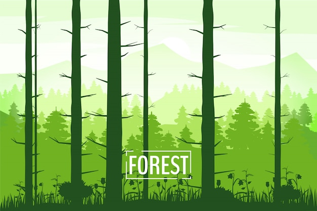 Весенний красивый пейзаж, силуэты стволов деревьев, зеленый цвет листвы