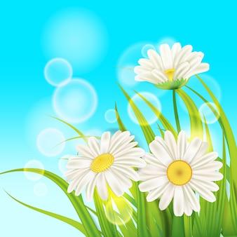 Весенние ромашки на фоне свежей зеленой травы, приятных сочных весенних цветов