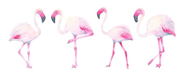 Акварель ручной росписью тропический розовый фламинго, изолированные на белом