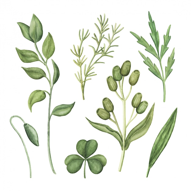 水彩の緑、緑のハーブと植物のセット