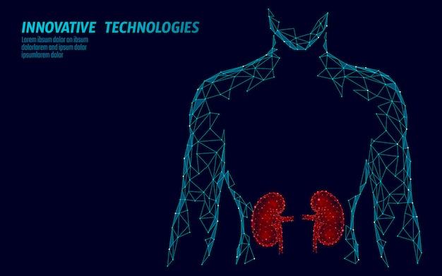 腎臓内臓男性シルエット低ポリ幾何モデル。泌尿器系医学治療。未来の科学技術の多角形の幾何学的なワイヤーメッシュ