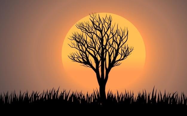 草で枯れ木の日没の風景